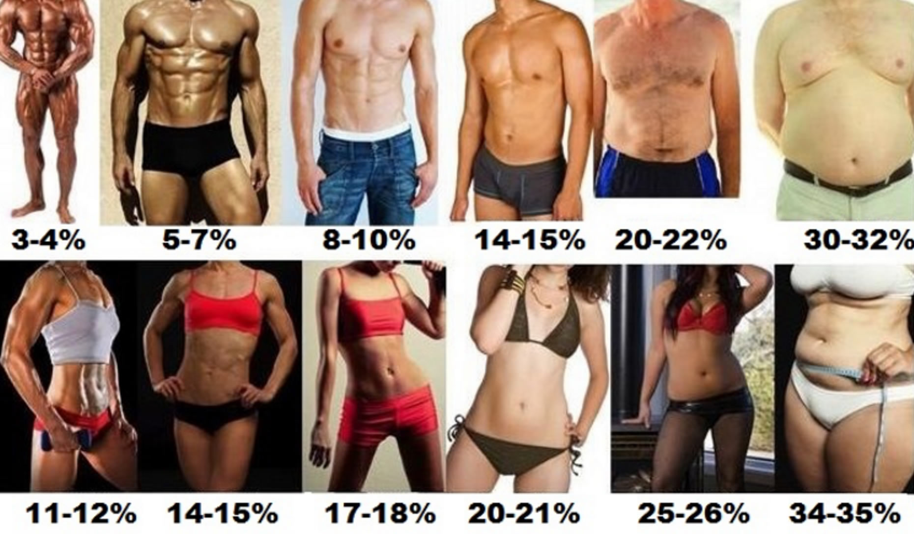 ideal body fat percentage